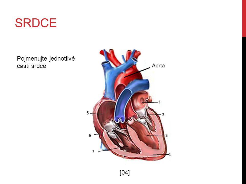 srdce Pojmenujte jednotlivé části srdce [04]